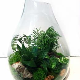Terrarium with fern and acorn