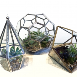 Terrariums Set