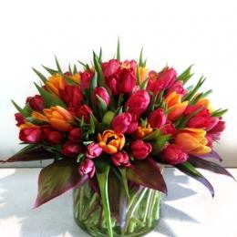 Vibrante Tulips