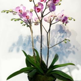 Fall Orchids