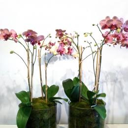 Fall Orchids Duet