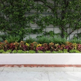 Welltower Landscape Maintenance in Beverly Hills