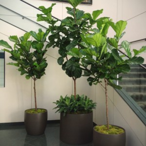 Interior Plant Arrangements - Modern Floristry Inc.